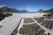 Hout Bay Dune Rehabilitation Project is in good shape